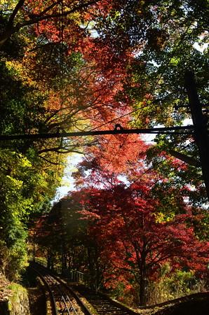ケーブルからの紅葉景色
