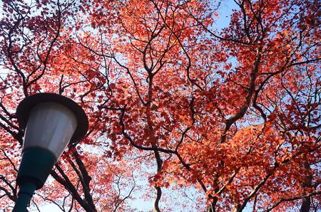 ケーブル比叡駅脇の紅葉