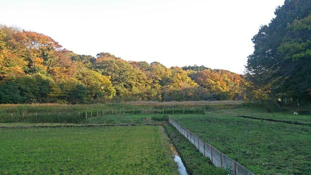茅ヶ崎里山公園 湿地