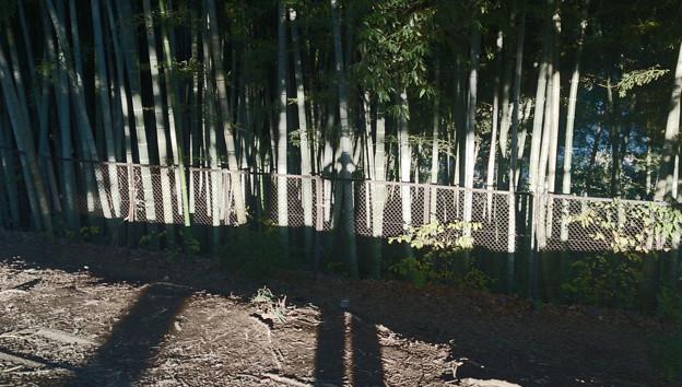 茅ヶ崎里山公園 竹やぶ