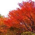 Photos: 西山公園2