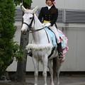 写真: 川崎競馬の誘導馬05月開催 誕生日記念レースVer-04-large