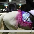 写真: 川崎競馬の誘導馬05月開催 藤Ver-120514-13-large