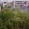 Photos: hinokuchi_0501