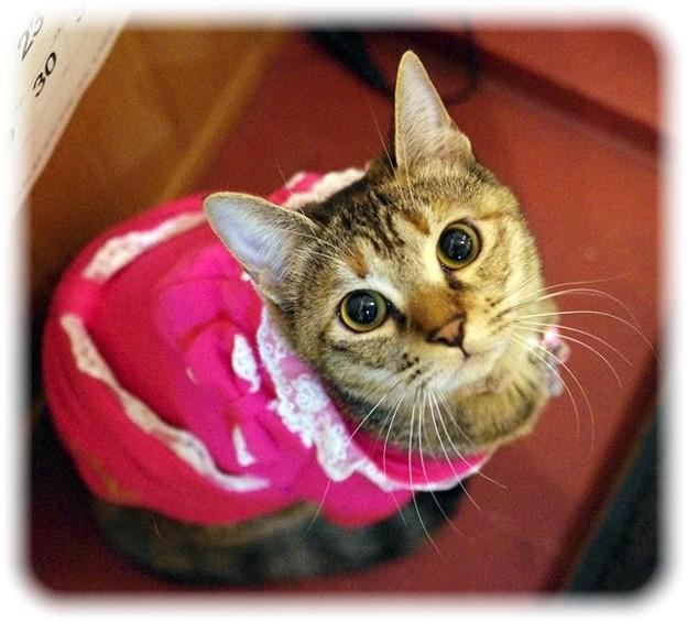 ピンクのドレスで