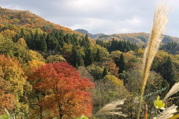 成沢城址公園~東側を望む
