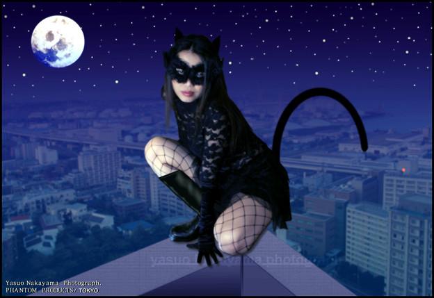 Sexy Cat in Yokohama Midnight