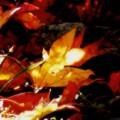Photos: 木漏れ日の秋