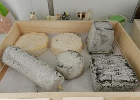 やぎと羊のチーズ−札幌