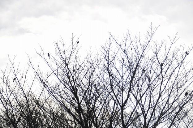 枯木の鳥たち