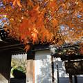 写真: 龍安寺_4