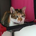 Photos: 2011092503