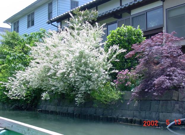 40-福岡 柳川 掘割めぐり-20050513-28