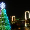 Photos: クリスマスツリー、はじめました
