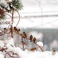 Photos: 雪ですなぁ…