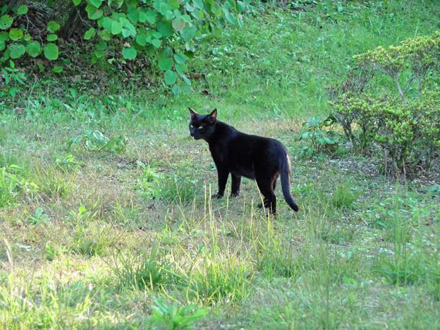 黒猫。(某宅急便ではありません)
