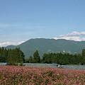 赤そば畑から見る陣馬形山。
