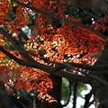 Photos: 穏やかな光と紅葉-I