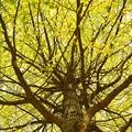 Photos: 巨木