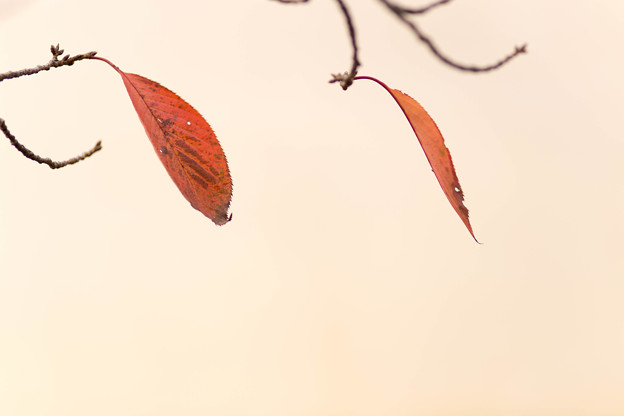 a pair of leaves