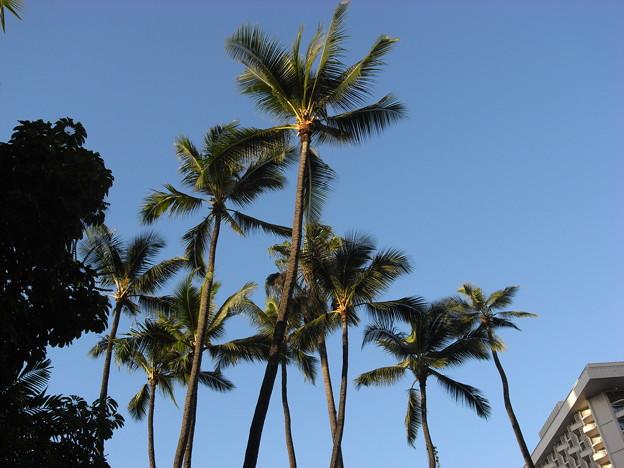 写真: 帰るころに晴れる空