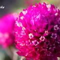 Photos: 花の中の小さな花