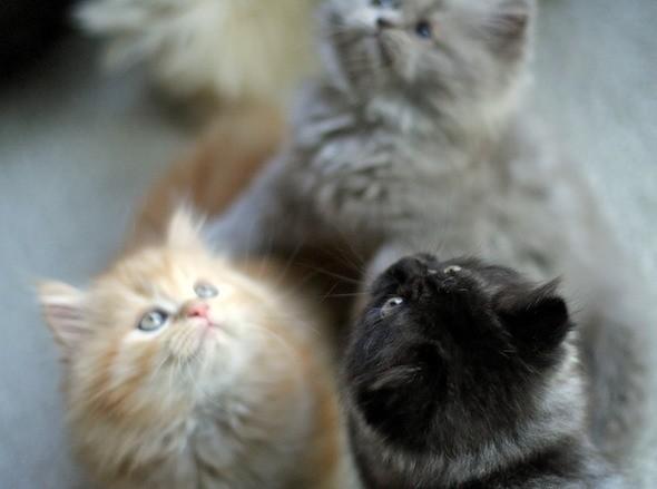 kitten1044_15