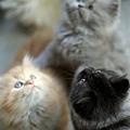 Photos: kitten1044_15