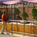 写真: 秋の名古屋城 - 09:盆栽展