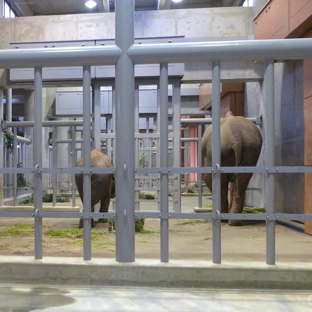 ゾウ舎の中で食事中だったアジアゾウの親子 - 1