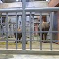 Photos: ゾウ舎の中で食事中だったアジアゾウの親子 - 1
