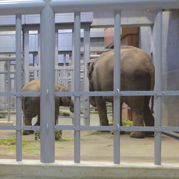 ゾウ舎の中で食事中だったアジアゾウの親子 - 2