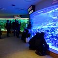 Photos: 名古屋港水族館 - 45