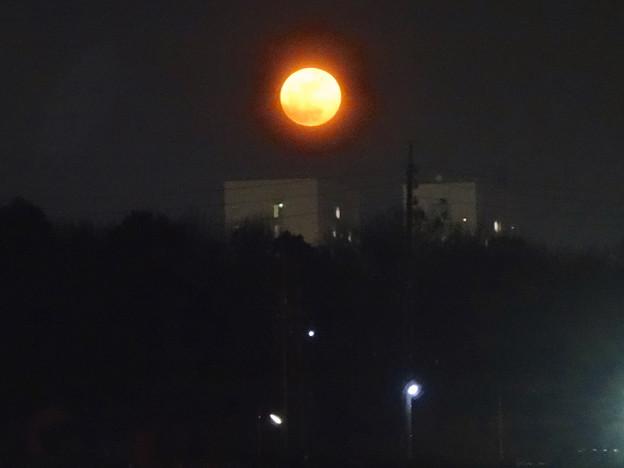 昇ったばかりで、赤みが濃い月(今年初の満月) - 2