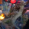 Photos: わんにゃんドーム 2015 No - 061:水槽の中で激しく動くトカゲ