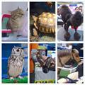 わんにゃんドーム 2015 No - 169:会場にいた様々な動物