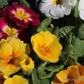 Photos: hiro 君のための 「 春 」