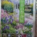 Photos: 京都植物園