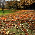 Photos: 落ち葉の季節 (舎人公園)