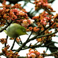 Photos: 春の兆し