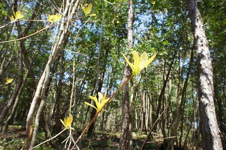 leaves04202011nex5-01