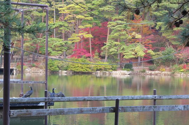 Photos: 秋の鳥