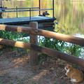池のネコとトリ