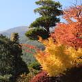 写真: 三段紅葉