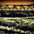 写真: 枯薄鉄橋.......