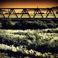 枯薄鉄橋.......