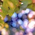 銀杏紫雨.......