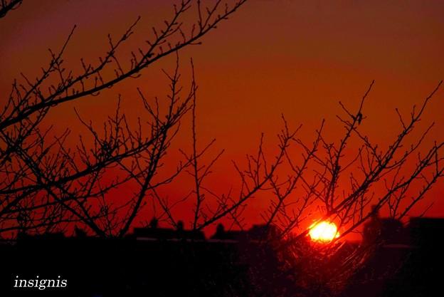 生まれたての太陽......
