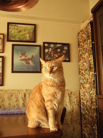Noble cat