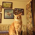 Photos: Noble cat